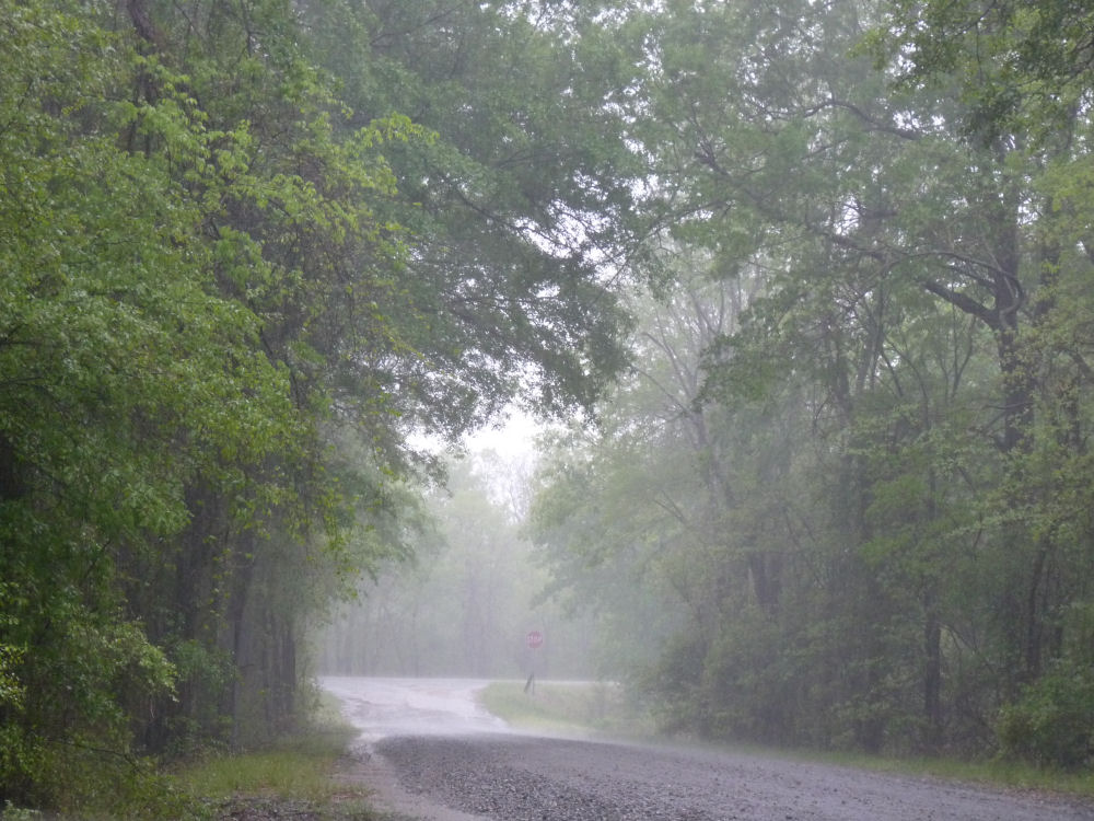 RainFlowers041809rainDagmar-1R.jpg