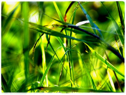 fű.jpg
