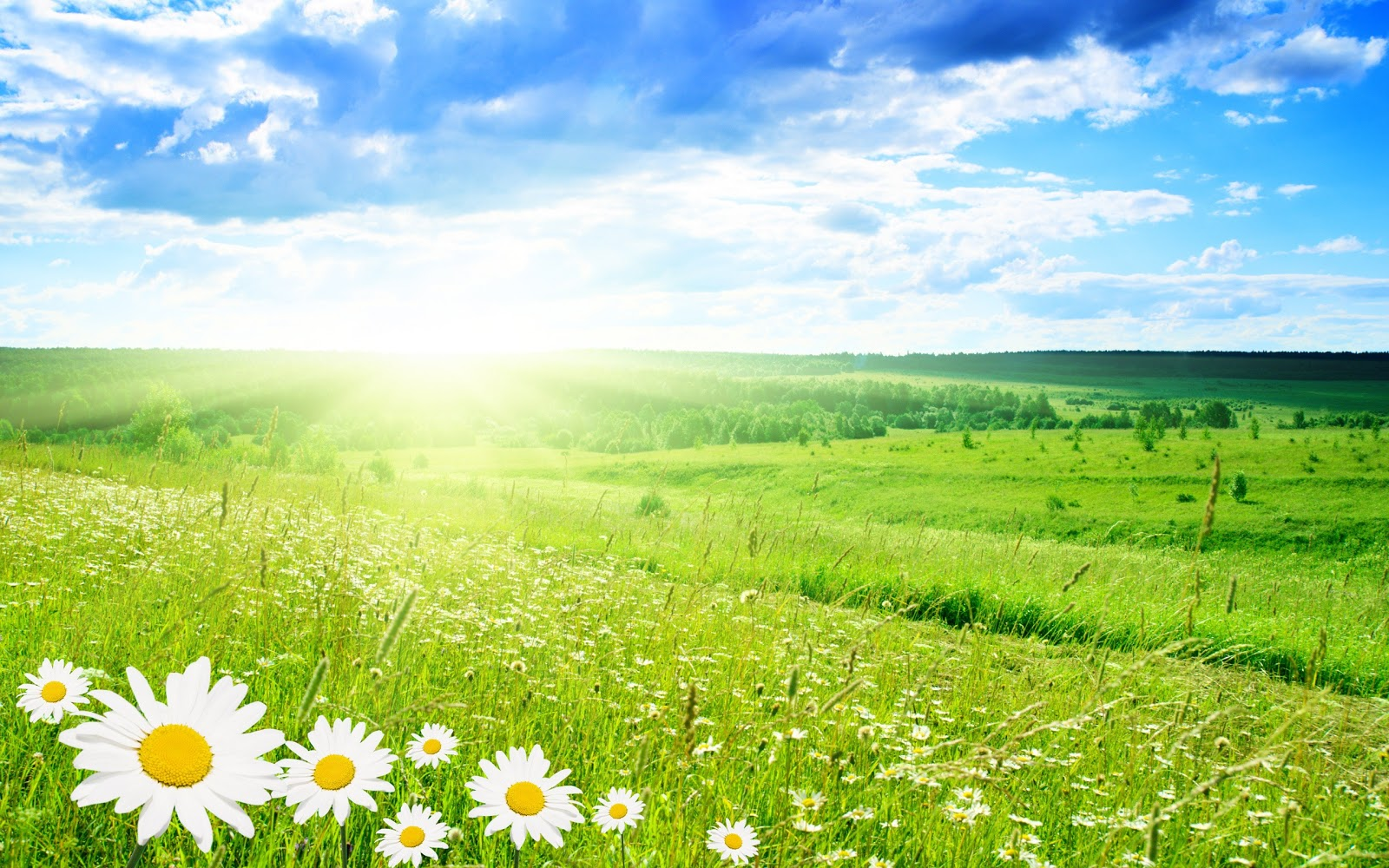 green-landscapes-flowers-daisy-green-field-bright-HD-Wallpapers.jpg