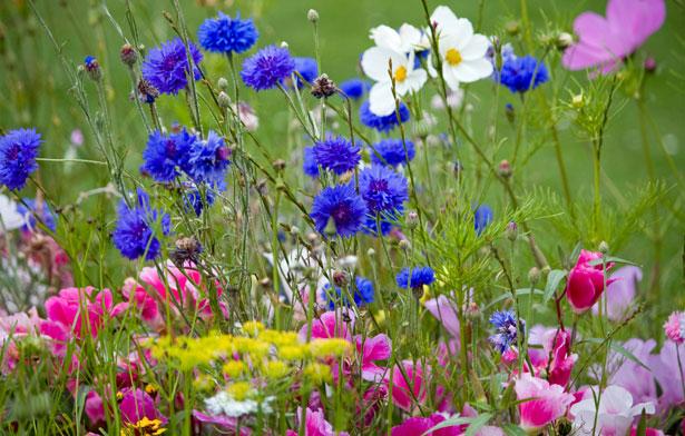 wild-flowers-in-meadow.jpg