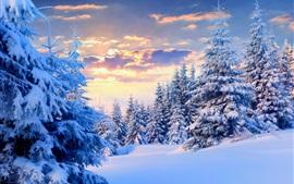 winter-snow-trees-sky-sunset-nature-landscape_s.jpg