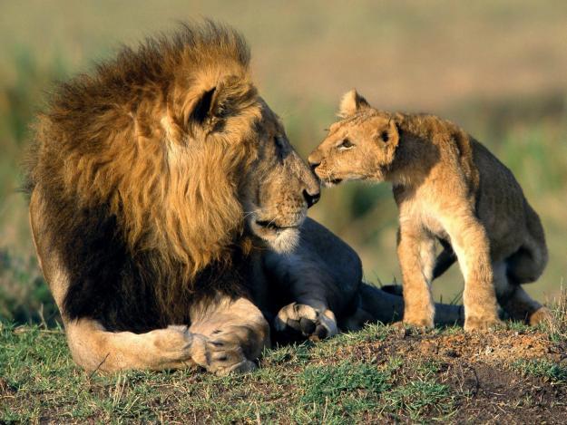 1347969914_439596451_1-Pictures-of--Kenyan-Safari-Tour-Packages.jpg