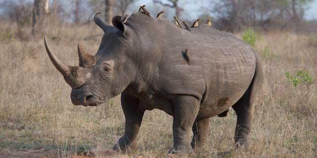 3-photographic-safari-packages-south-africa-masai-mara-kenya-botswana-tanzania-namibia-photo-rhino.jpg
