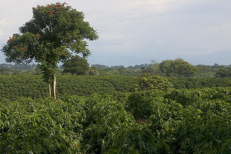 800px-Cafe_Quimbaya_2005-08-27.jpg