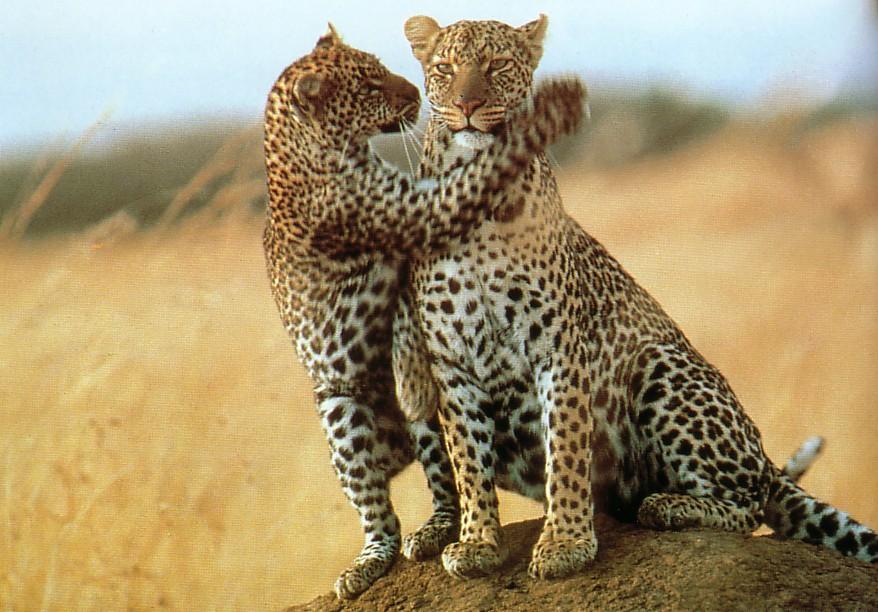 kenya-safaris.jpg