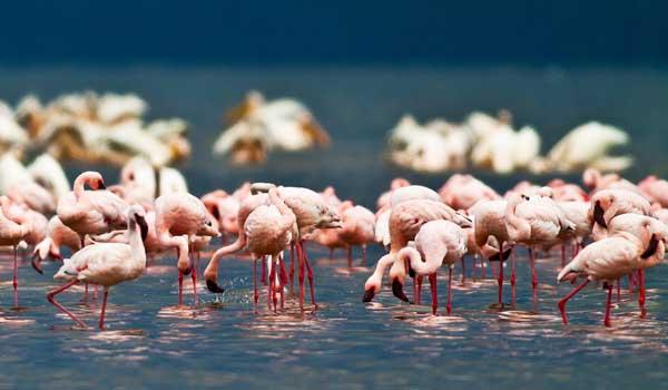 kenya_aberdares_lake_safari.jpg