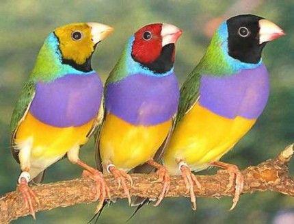 madár.jpg