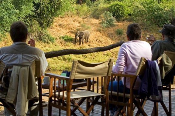 sas_watching_elephant_outf.jpg