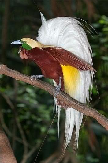 szép-képek-madár-1.jpg