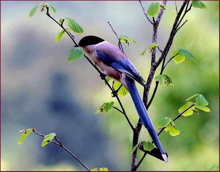 szép-képek-madár-41.jpg