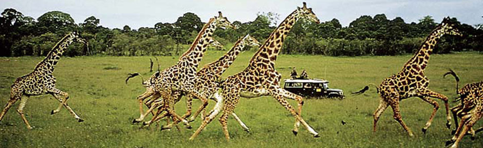Amboseli.jpg