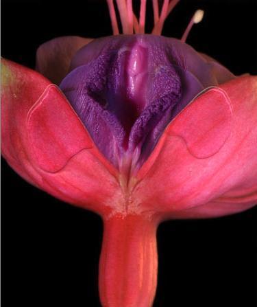 vag flower.jpg