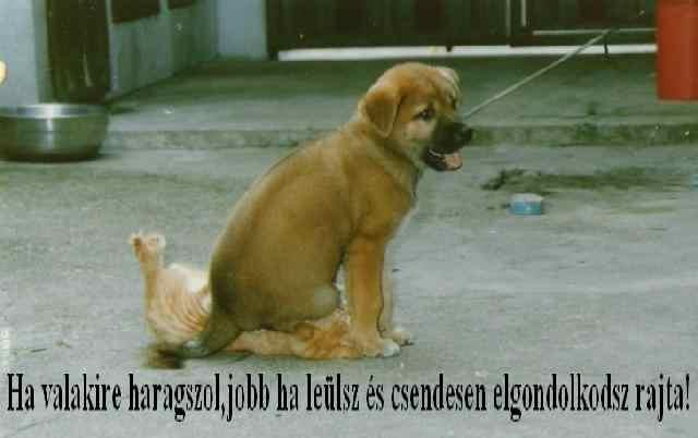kutya-macska01.jpg