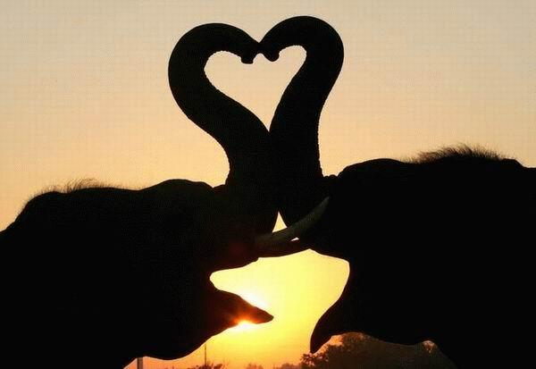 szerelmeselefantok.jpeg