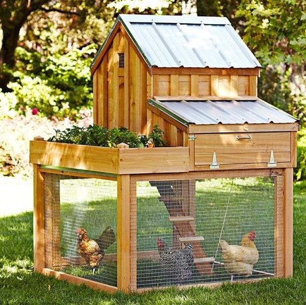 Urbánus csirke házat keres