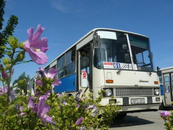 61-es_busz_pecs.jpg