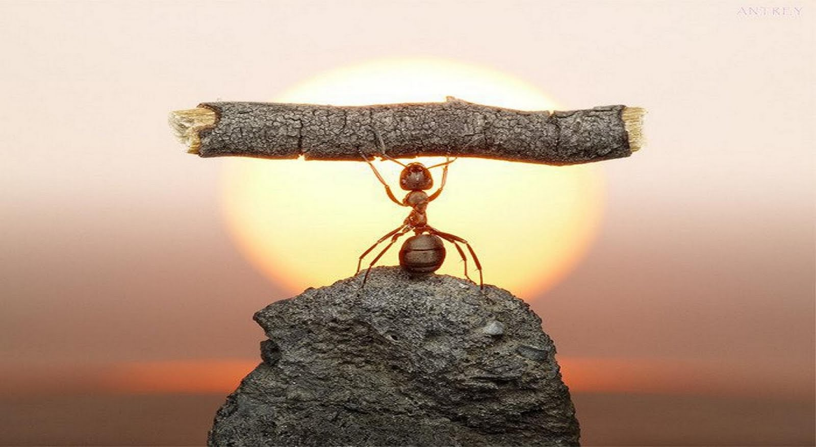 hard-work-is-the-key-to-success.jpg