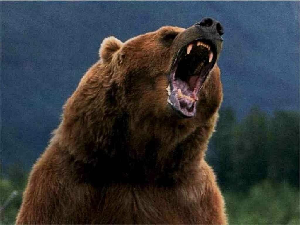 wild_bear.jpg