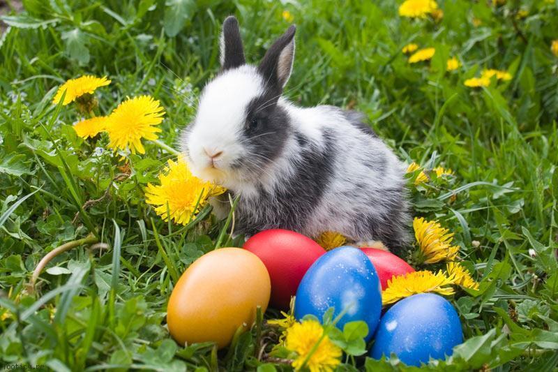 Joyeuses p ques avagy h sv t franciaorsz gban popkult for Decoration lapin de paques