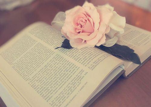 book_and_rose_by_ladyfatadudesons-d4wdclu.jpg