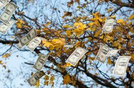 moneytree.jpg