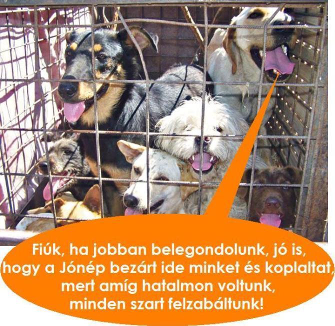 Bezárt kutyák.jpg