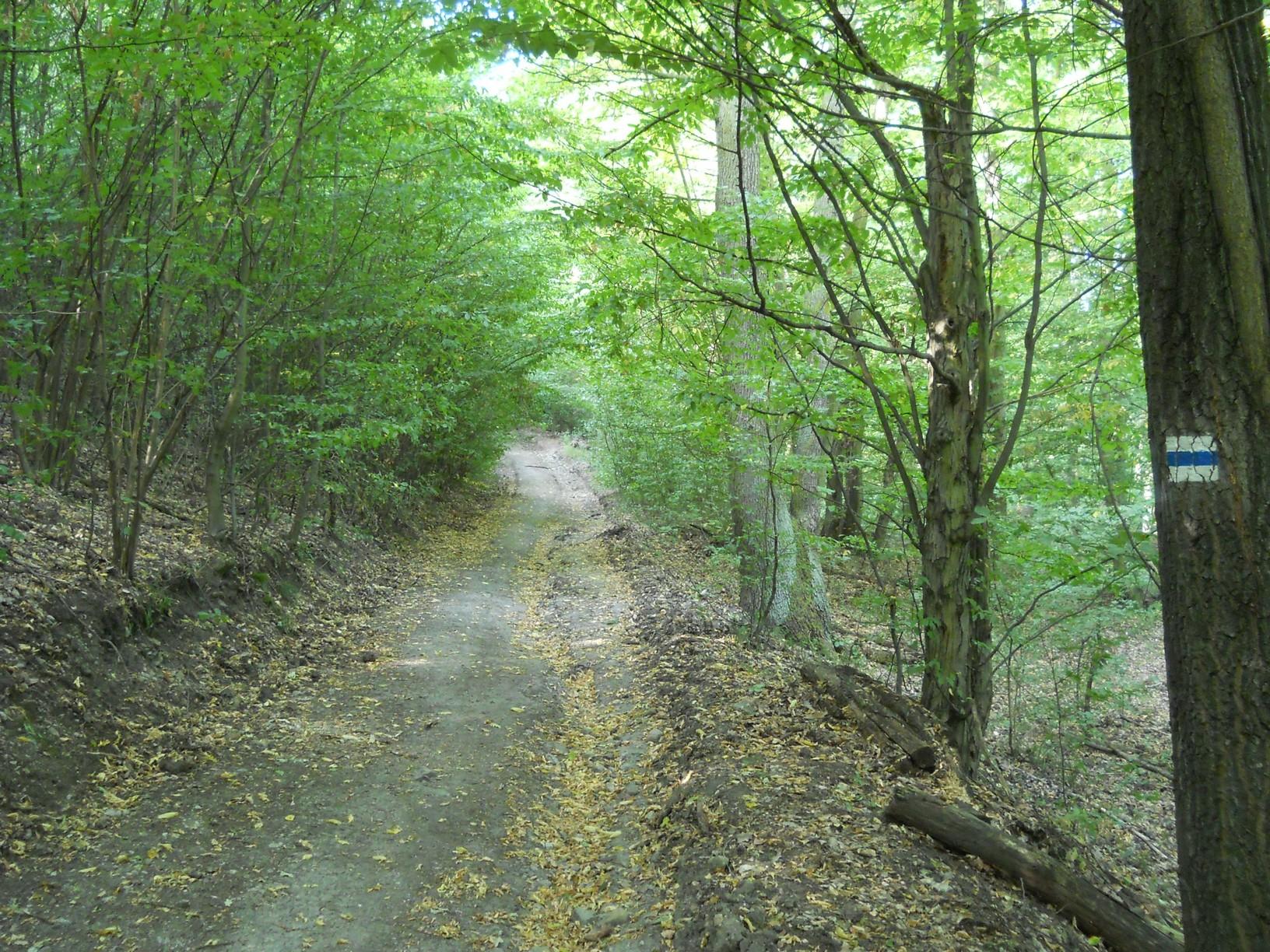 Egyre emelkedő földút a Nagy-Kő-hegyre