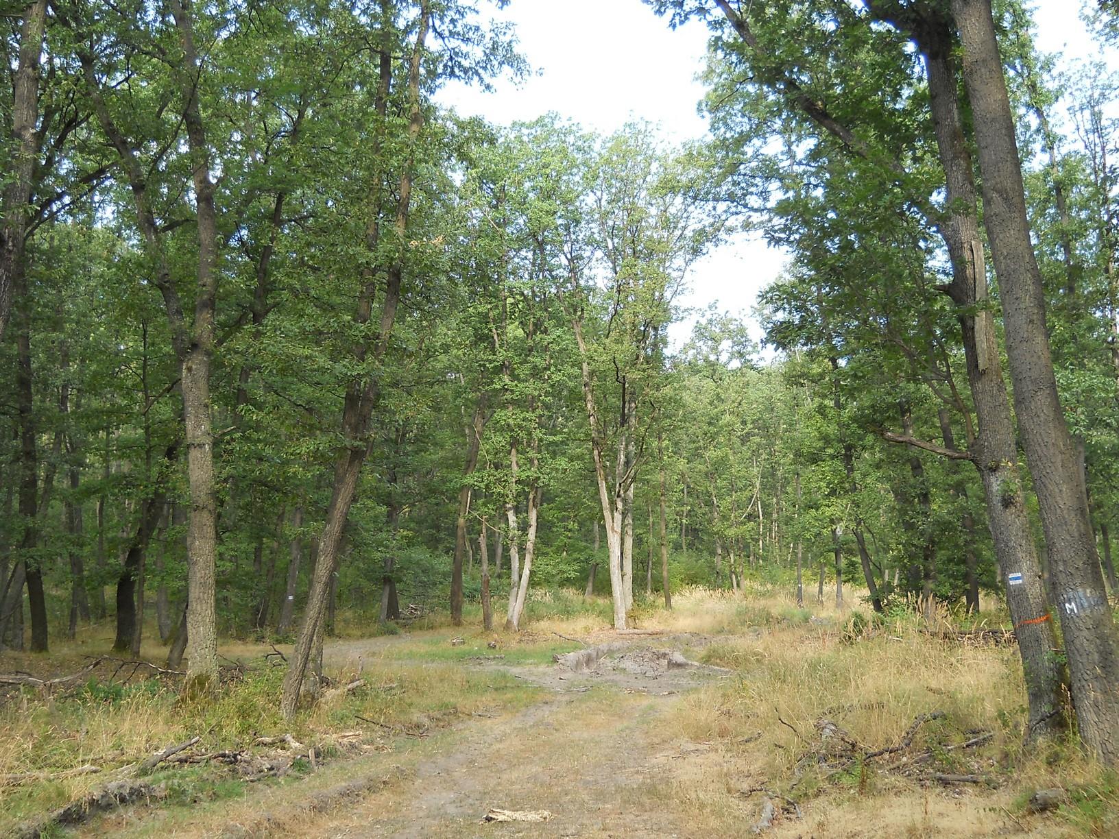 Erdészeti rakodó a Nagy-Kő-hegy oldalában