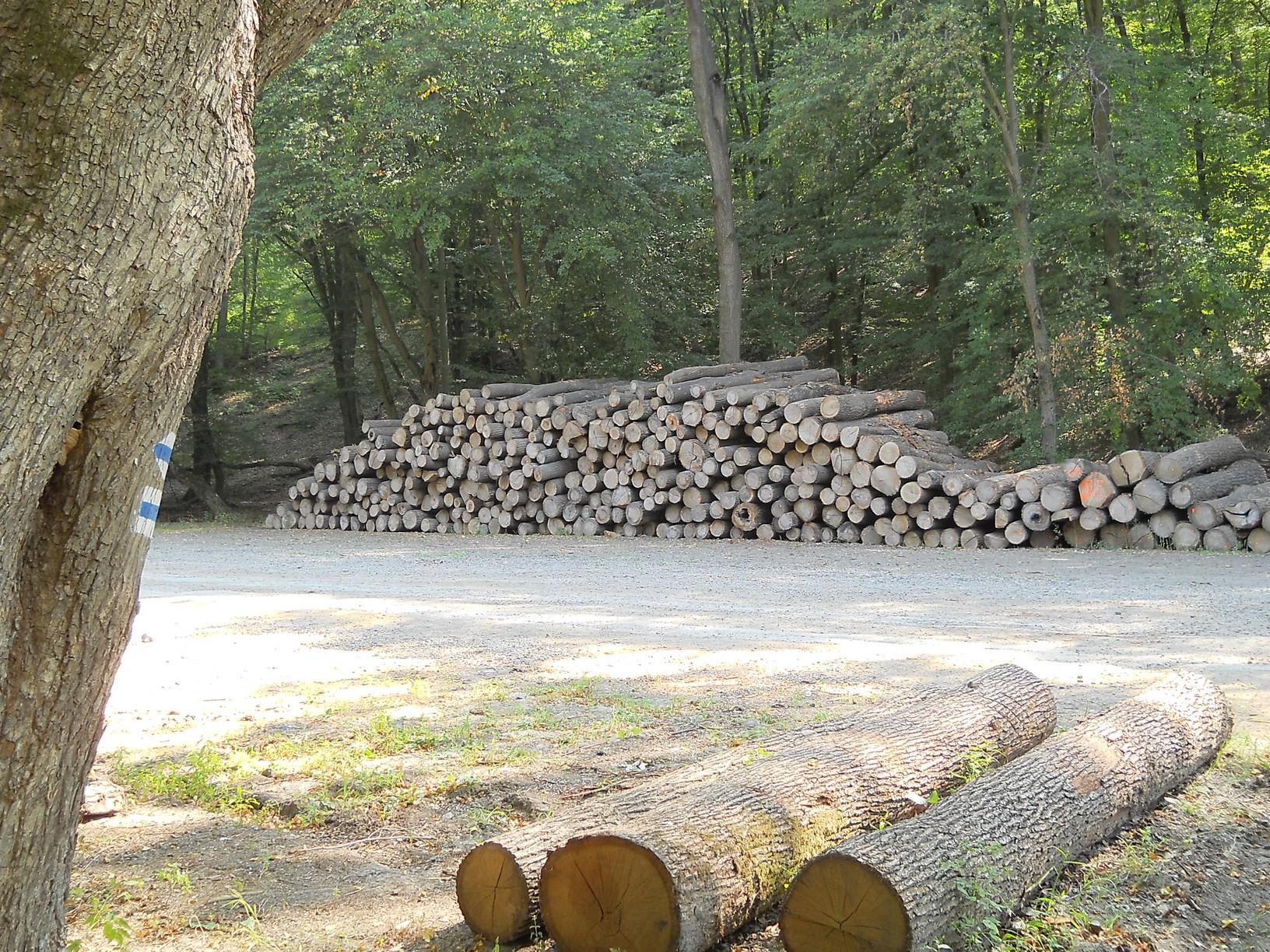 Erdészeti rakodó Magyarkút határában, innen könnyen járható erdészeti út vezet Szokolyára
