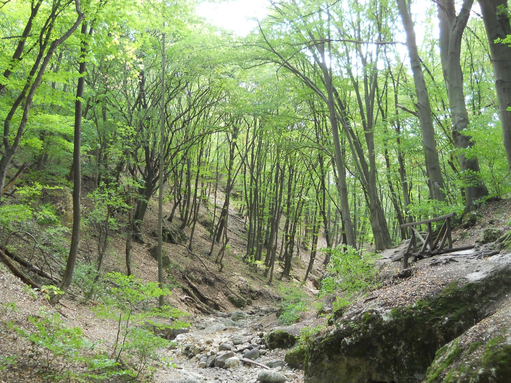 A kiszáradt Dera-patak völgyében, a pilisszentkereszti Szurdokban