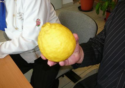 citrom02.jpg