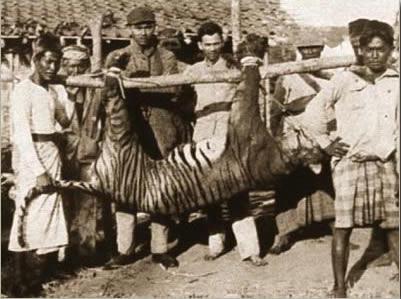 1937bali_tiger37.jpg