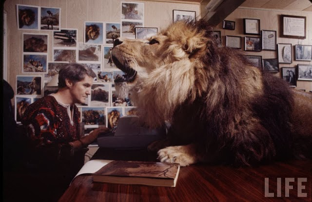 Living with a Lion, ca. 1970s (10).jpg