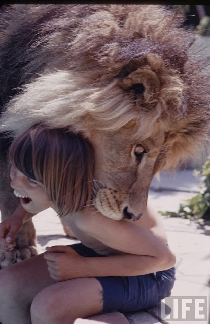 Living with a Lion, ca. 1970s (16).jpg