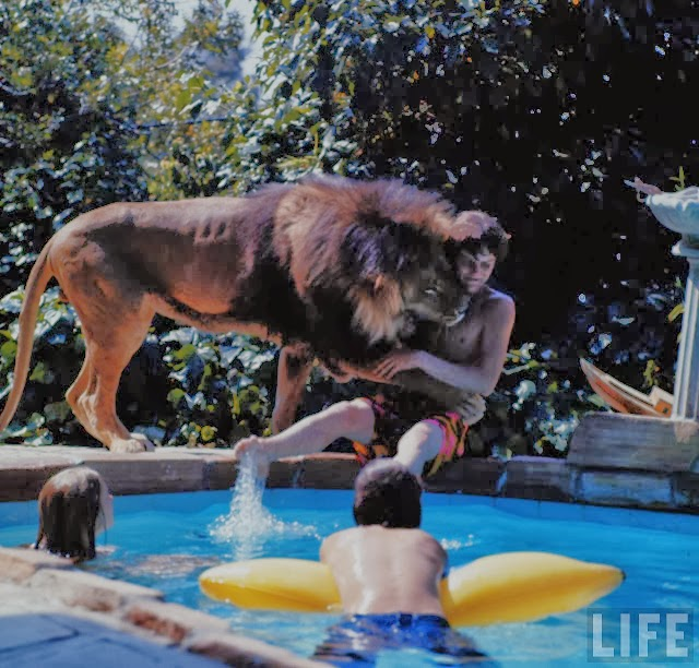 Living with a Lion, ca. 1970s (18).jpg