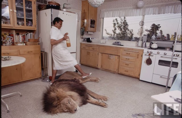 Living with a Lion, ca. 1970s (3).jpg