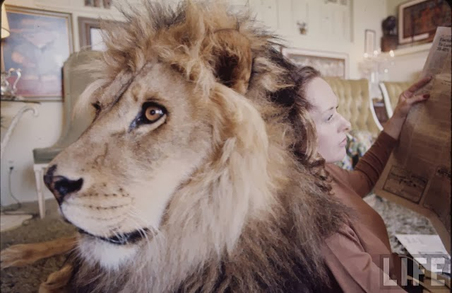 Living with a Lion, ca. 1970s (6).jpg