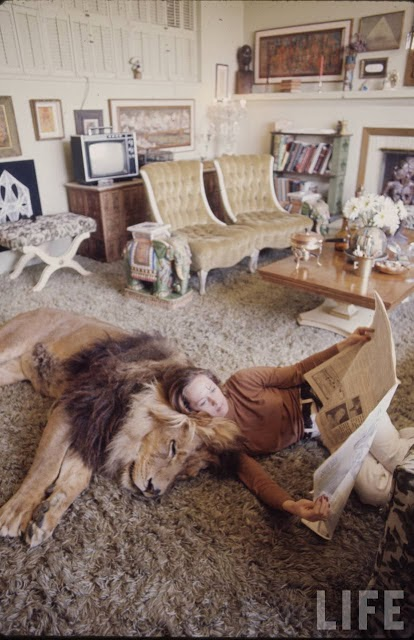 Living with a Lion, ca. 1970s (7).jpg