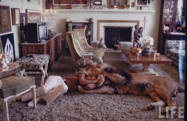 Living with a Lion, ca. 1970s (8).jpg