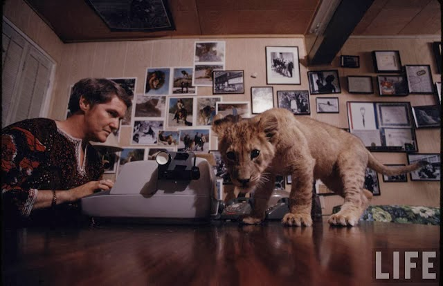 Living with a Lion, ca. 1970s (9).jpg