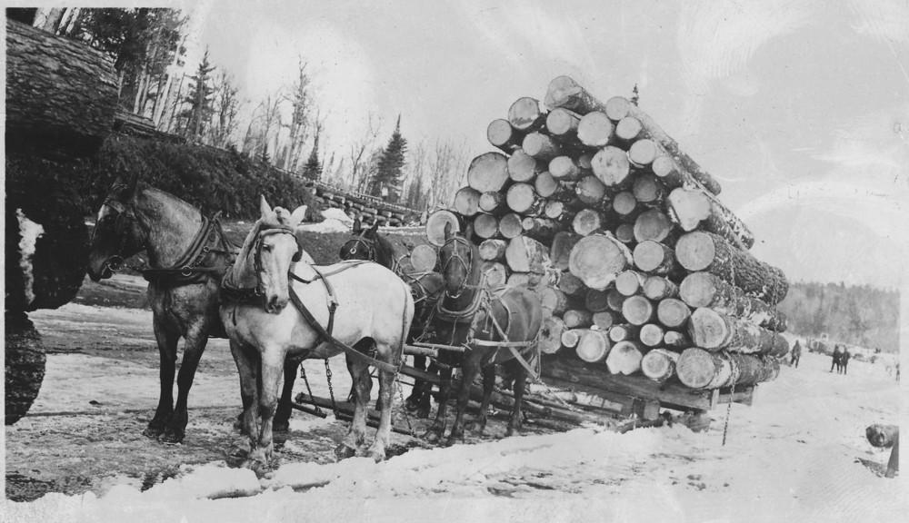 Big Dog Lumber