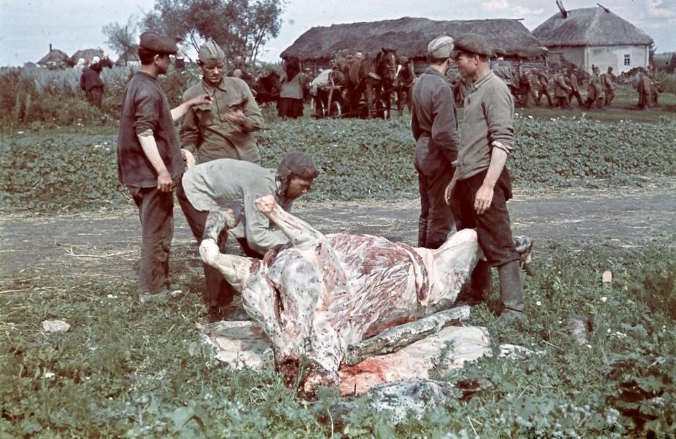 1942_zHadifoglyok elhullot lovat nyúznak, hogy aztán megegyék.jpg