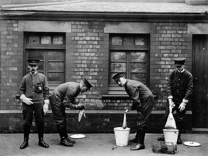 1910. Városi hivatásos patkányvadászok Liverpoolban..jpg