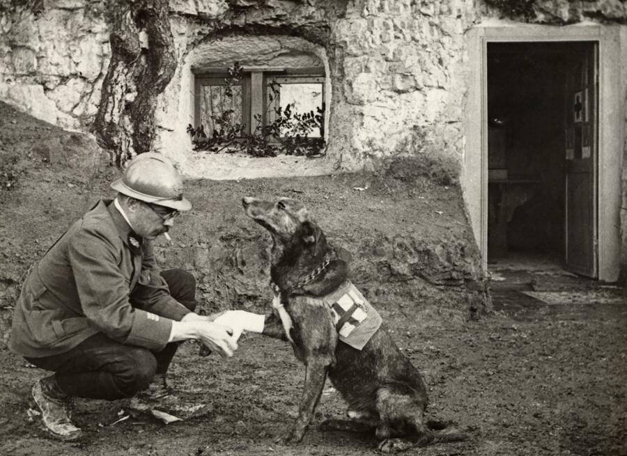 1917. Belgium. Vörös Keresztes mentőkutya sebét kötözi egy katona..jpg