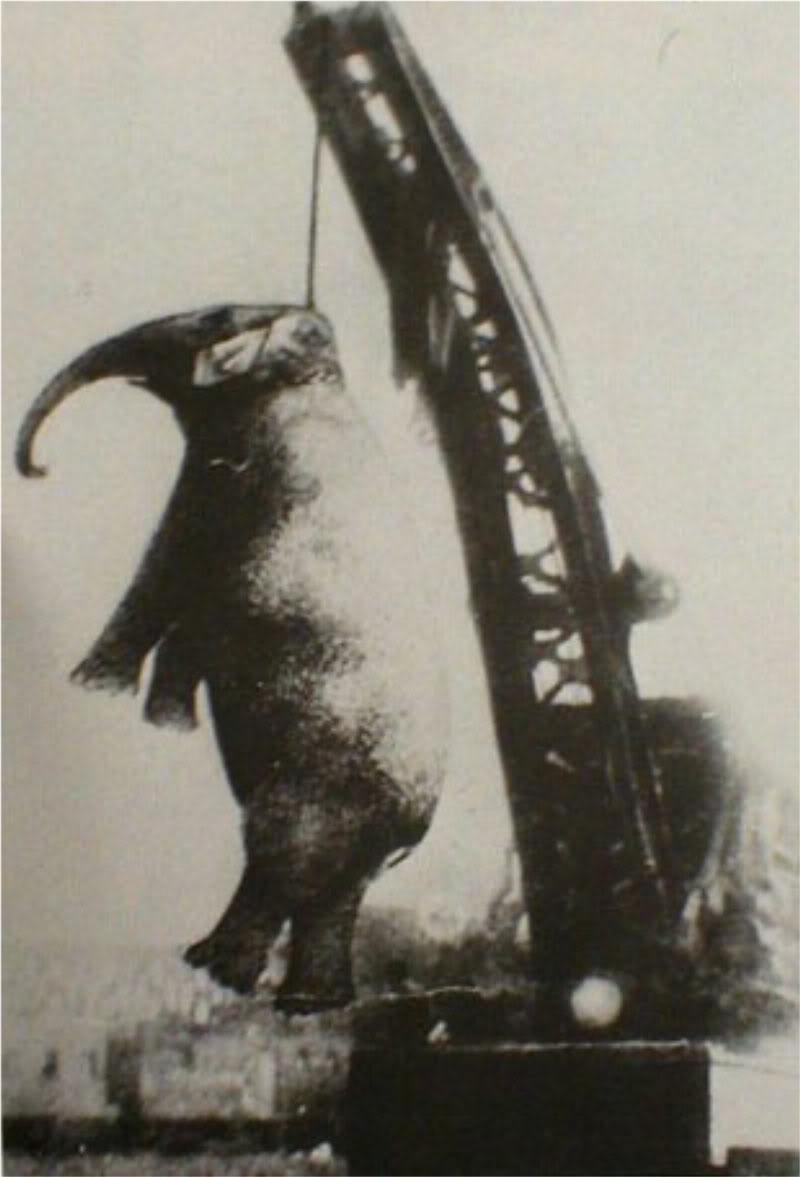 1916. Mary az elefánt kivégzése..jpg