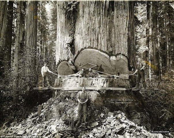 1915. Kaliforniai favágók..jpg