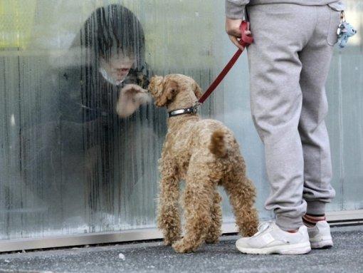 2011. A radioaktivitás miatt izolált fukusimai lány kutyájával találkozik..jpg