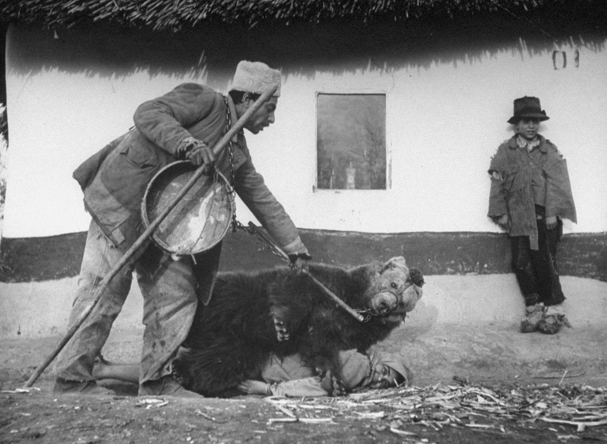 1946. Cigány nőt gyógyít a medve. Fura módja a reuma kezelésének Romániában..jpg