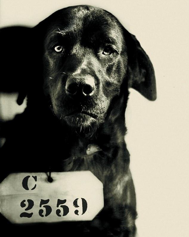 1924. Pep a kutya, akit életfogytiglanra ítéltek Pennsylvania kormányzója macskájának megölése miatt (mi vaaaan)..jpg