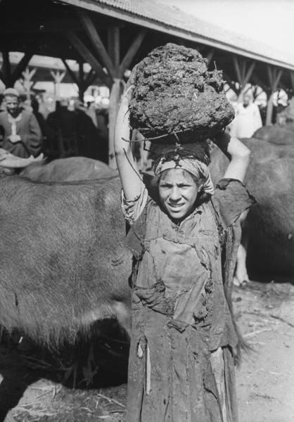 1942. Fűtésre használt trágyát szállító lány Kairóban..jpg